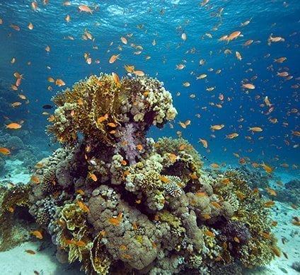 bmot-beforeyougo-diving-divecenters-bensbluehole-5f6a179ba3ade-424x389